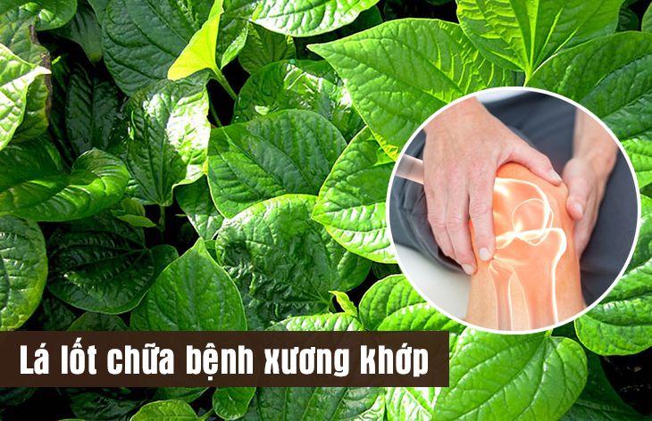 Cây lá lốt có tác dụng chữa bện xương khớp hiệu quả