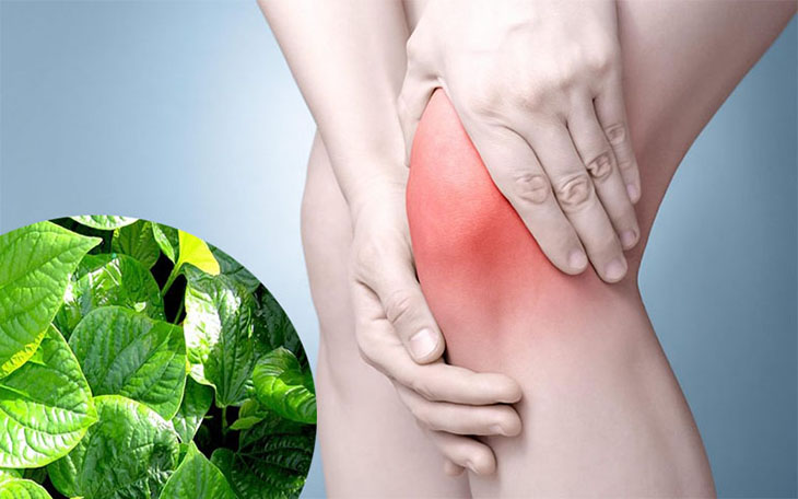 Nước lá lốt có thể giúp cải thiện tình trạng đau nhức ở khớp gối