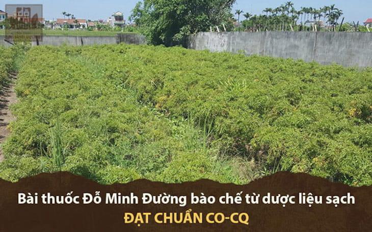 Vườn dược liệu tự nhiên đạt chuẩn CO - CQ của nhà thuốc tại Hà Nội, Hưng Yên, Hòa Bình