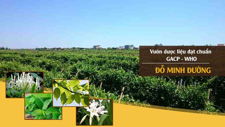 ườn dược liệu Đỗ Minh Đường tại Hưng Yên, Hòa Bình và Hà Nội