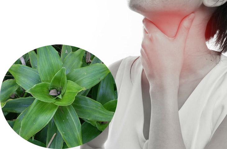 Bài thuốc từ cây lược vàng trị viêm họng hiệu quả
