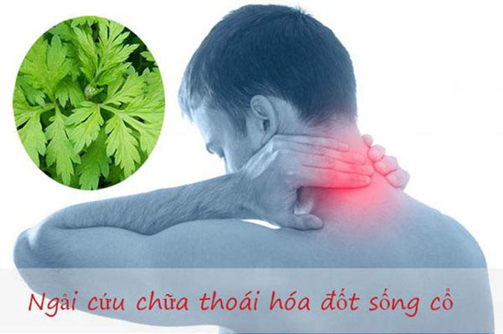 Ngải cứu có tác dụng kháng viêm, hạn chế sự xơ hóa và giảm đau hiệu quả