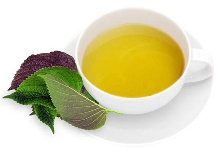 Đun nước lá tía tô và dùng để uống cũng là một trong những phương pháp mang lại hiệu quả rất tốt