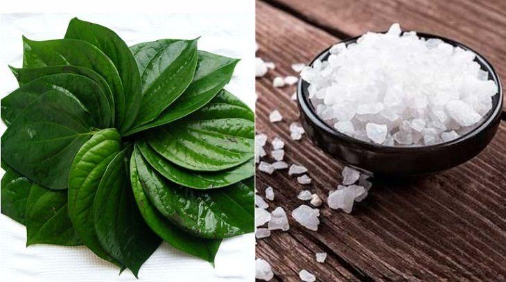 Bài thuốc chữa viêm lộ tuyến từ trầu không và muối mang lại hiệu quả cao