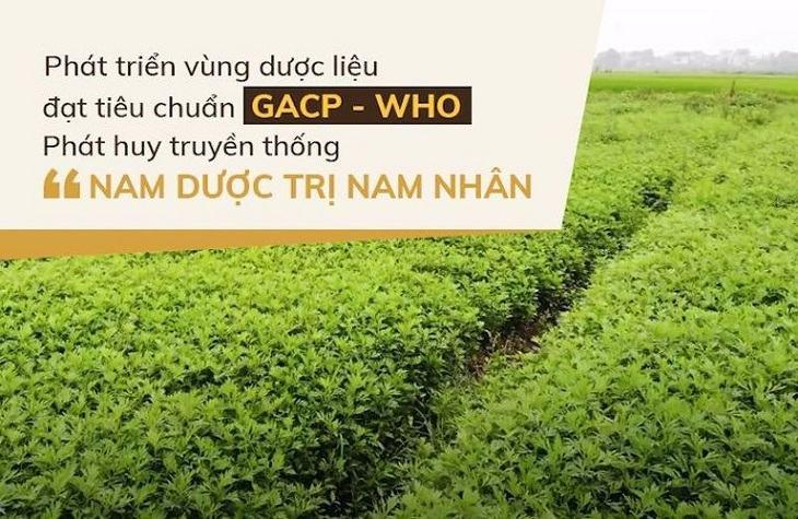Các thảo dược có trong bài thuốc đều được thu hái từ vườn nam dược sạch Đỗ Minh Đường