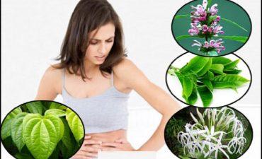 Hiệu quả chữa viêm cổ tử cung bằng thuốc nam