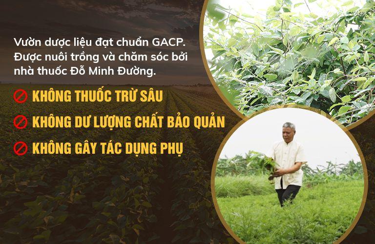Cam kết sử dụng 100% thảo dược từ tự nhiên, đạt tiêu chuẩn GACP-WHO